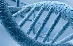 séquence ADN empêcher le vieillissement
